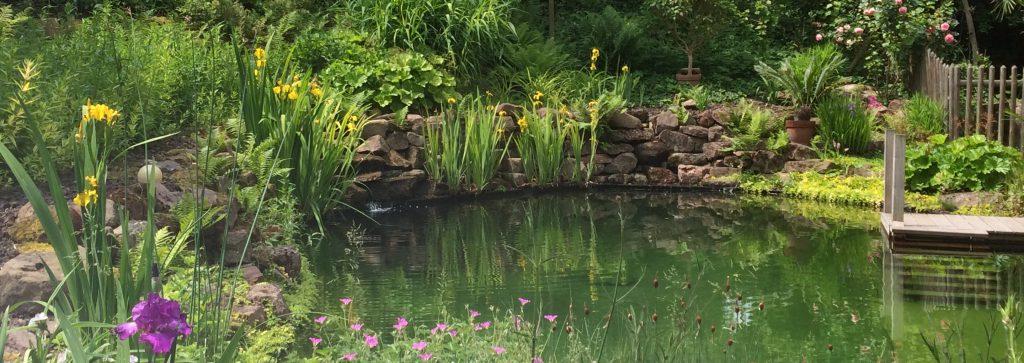 étang de baignade naturelle