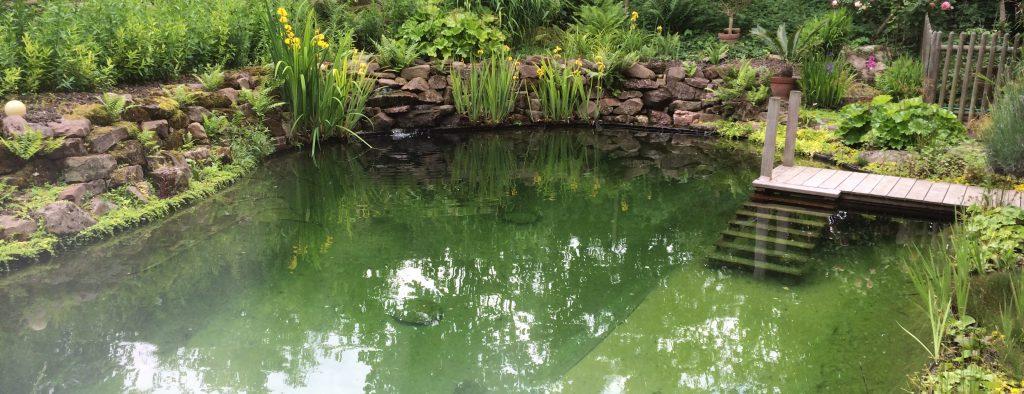 Escalier d'accès à l'eau de l'étang de baignade naturelle