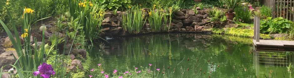 L'étang de baignade