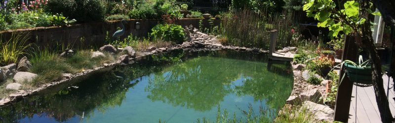 Transformation d'une piscine en baignade naturelle à Barr